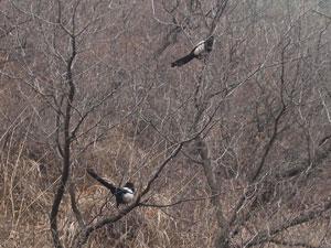 北京の鳥たち
