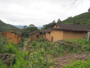 漳平水仙の茶畑